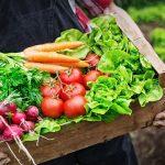 安心・安全な有機野菜が自宅に届く、北海道産の有機野菜宅配サービス5選