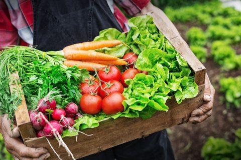 北海道から全国へ。安心・安全な有機野菜が自宅に届く、北海道産の有機野菜宅配サービス5選