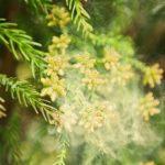 【アーユルヴェーダ】ターメリック(ウコン)は花粉症に効果てきめん!今からでも遅くない簡単レシピをご紹介。