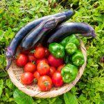 有機栽培に興味のある方必見!初心者でもできる農薬・化学肥料を使わない都内の貸し農園