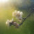 【アロマで花粉症対策】つら〜い花粉症は早めに対策を!子どもや妊娠中でも安心なアロマ&ハーブもご紹介。